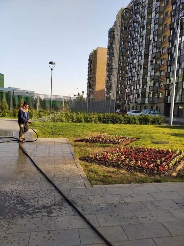 В Северном интенсивно поливают зелёные насаждения