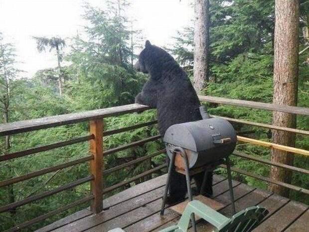 Незваные гости животные, косолапый, медведь