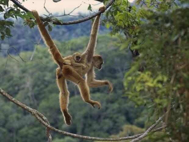 Чудо природы: то ли паук, то ли обезьяна
