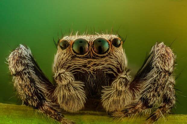 Пользователей напугала оптическая иллюзия с гигантским пауком в автомобиле