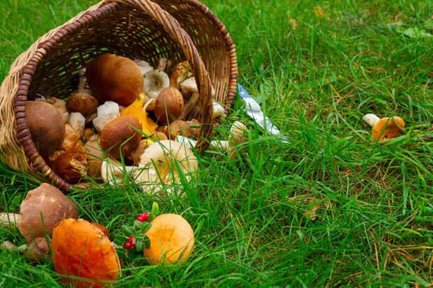 Подмосковная семья погибла после отравления грибами