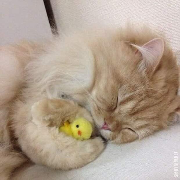 Добрых снов! домашние животные, животные, кошка, прикол, свинья, собака, юмор