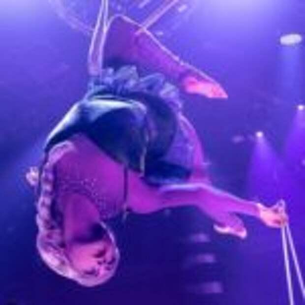 Несколько популярных цирков отказались от выступлений с животными