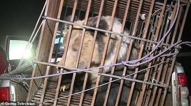 В Китае застрявшего медведя спасли ковшом экскаватора