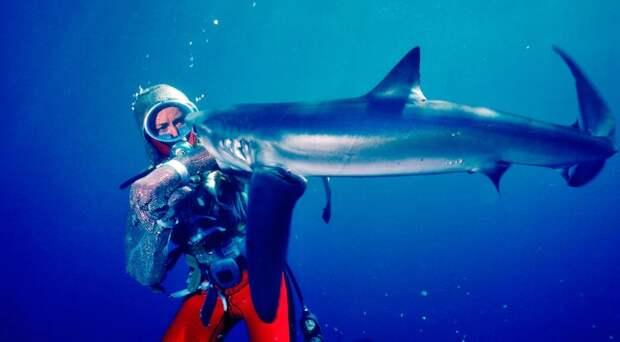В Новой Зеландии нашли три вида светящихся акул