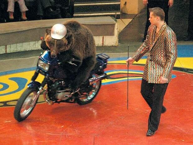 Медведь на мотоцикле
