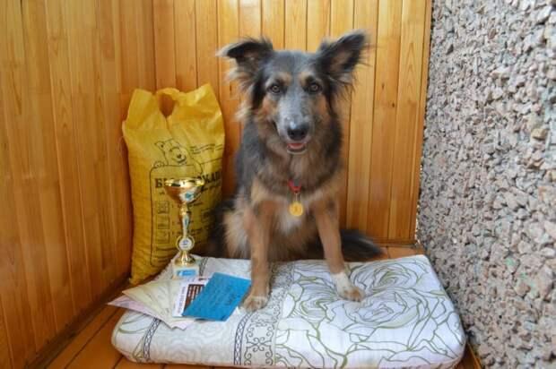 В мятой картонной коробке сидел брошенный щенок и дрожал… Он уже было смирился со своей участью, если бы не Анна