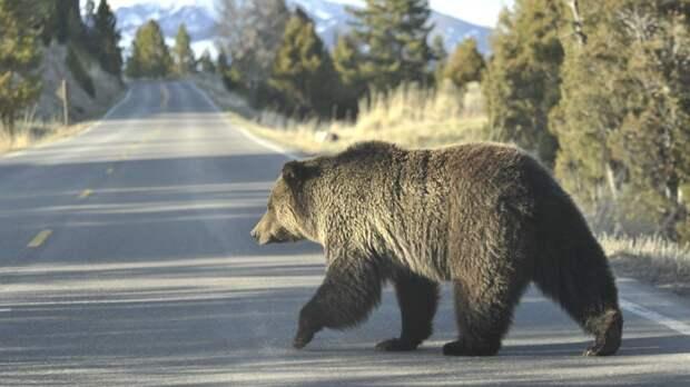 Американец чудом спасся от медведя и снял все на видео