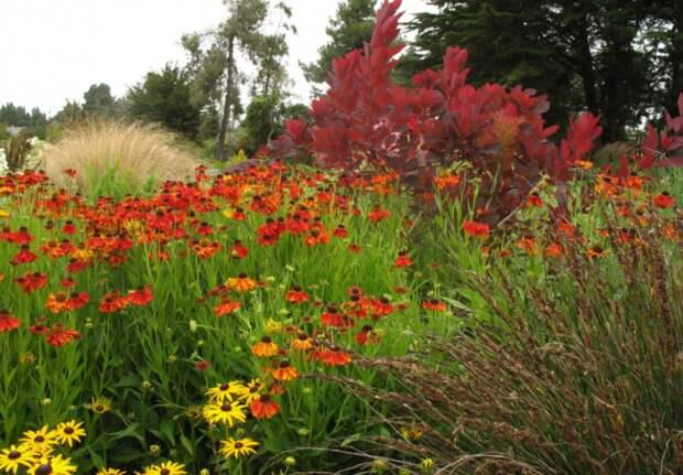 Множество видов рудбекии привлекают любителей и профессинальных цветоводов выращивать её в домашних условиях — в саду, на даче, в квартире
