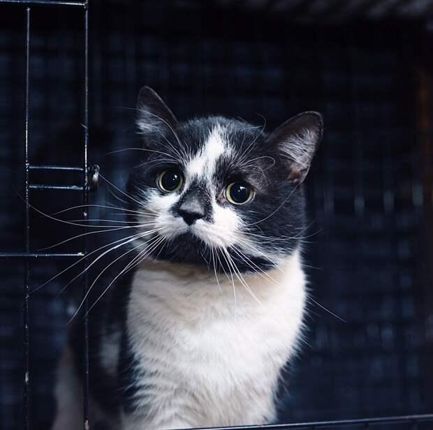 Он чудом выжил. Теперь, с вашей помощью, он будет самым счастливым и самым любимым котом!