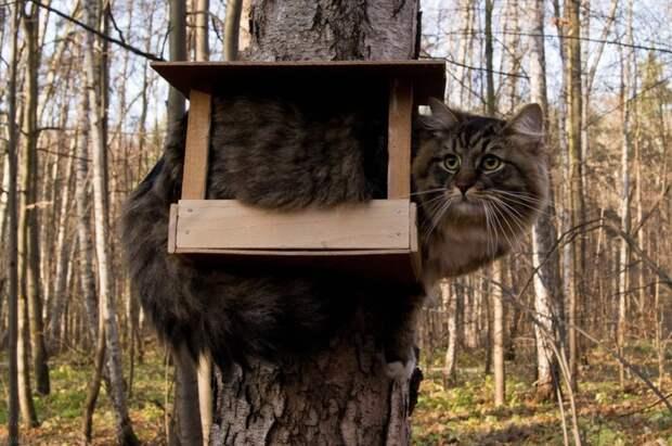 17 кошек, которые доказали, что этих животных не остановить!