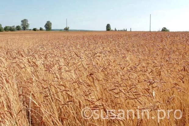 Аграрии Удмуртии впервые за 5 лет застраховали урожай