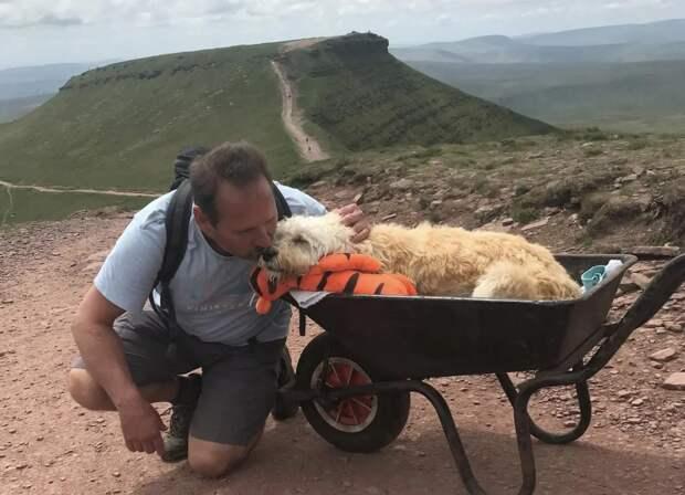 Парень устроил своему больному питомцу последнюю прогулку по его любимому маршруту