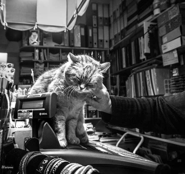 Фотографии кошек, которые живут в местах, где работают люди 17