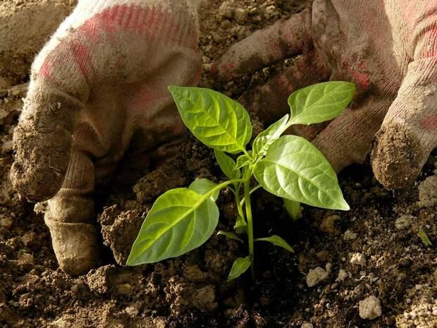 как посадить дерево инструкция
