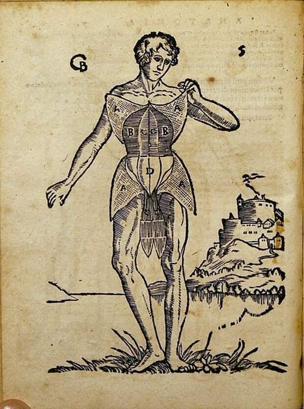 Заглянуть внутрь себя: как изучали человеческое тело в древности и что нового наука может рассказать нам сегодня