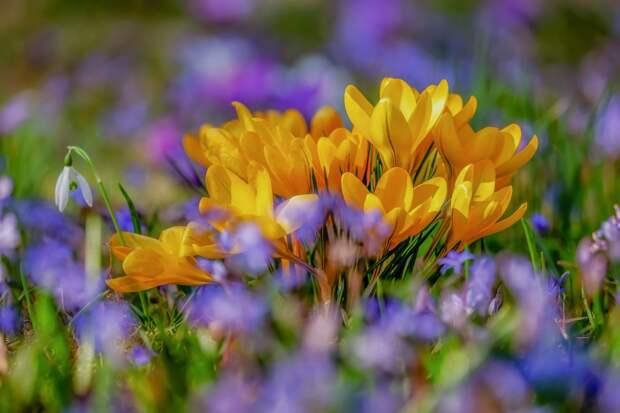 Весна придет в Крым через пять дней