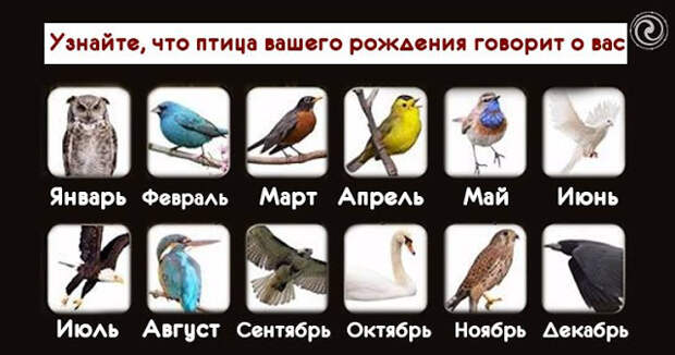 Узнайте, что птица вашего рождения говорит о вас