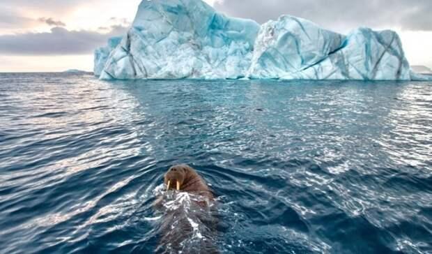 Так Арктику еще никогда неизучали