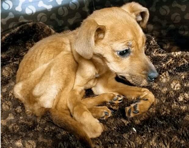 Сотрудники полиции прибыли на место ограбления и нашли полумертвого от голода щенка