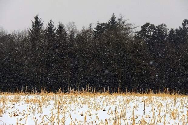В Удмуртии выявили зарастание сорняками 570 гектаров земли сельхозназначения