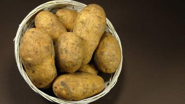 До 50 вёдер картошки с сотки: Раскрыта голландская система