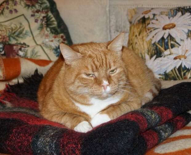 Он даже при хозяйке планомерно избивал котика... Ситуация критическая! Умоляем о срочной помощи!
