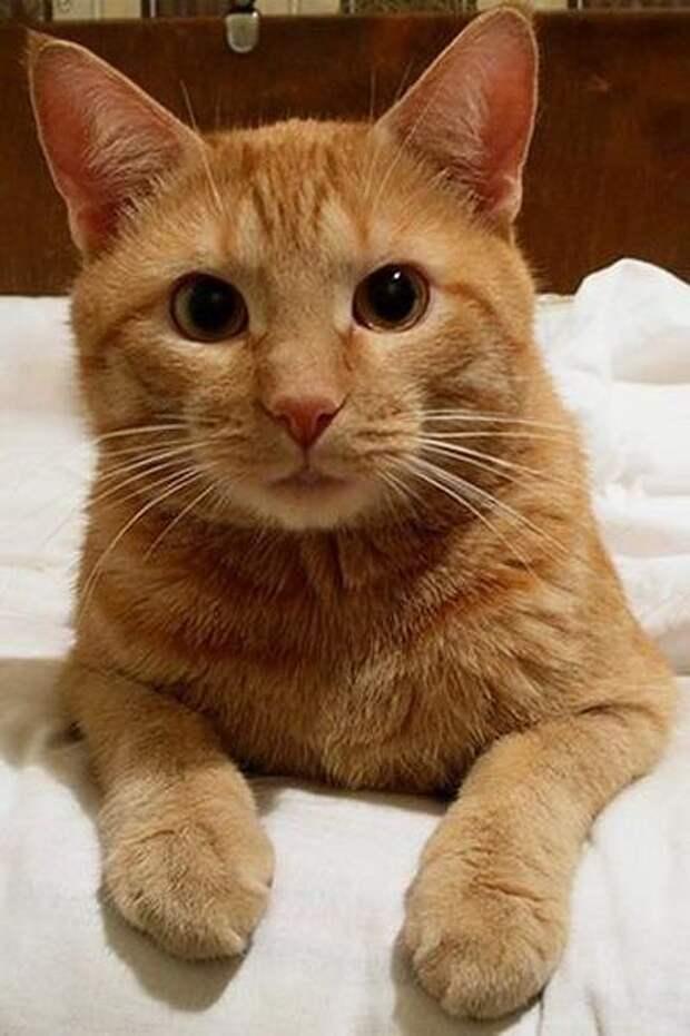 Позитивные и забавные фото приколы про котиков