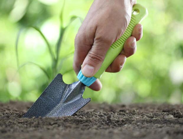 Рассаду высаживают в открытый грунт в конце мая или начале июня
