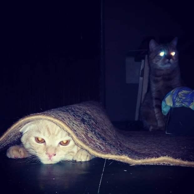 Спалились кот, коты, опасный кот, прикол, суровый