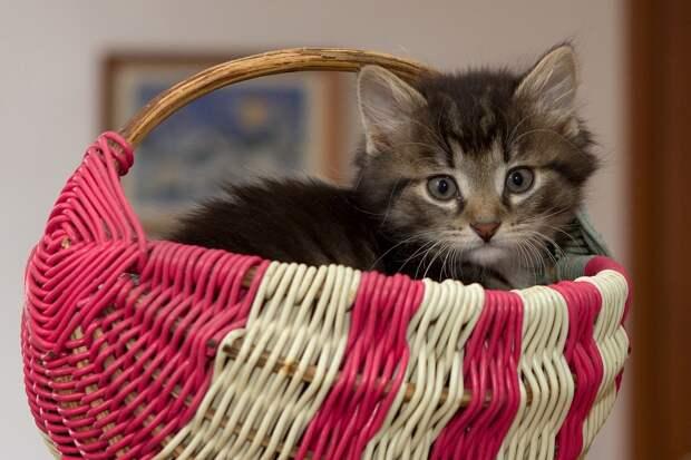 Котенок, Маленький, Котик, Милый, Домашние Животные
