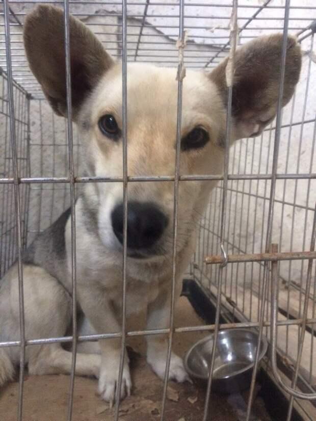 «Мешок катился по степи… » 3 истории о щенках, найденных в поле