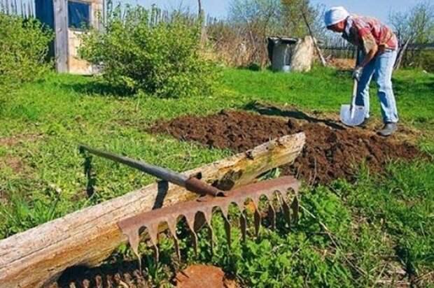 Эксперт рассказал, как не сорвать спину на дачных работах