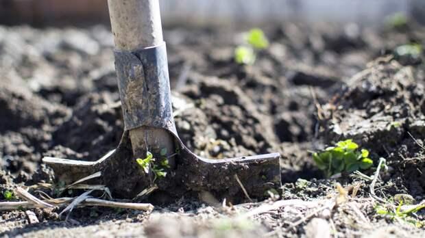 Дачникам дали советы, когда начать посев семян на огороде