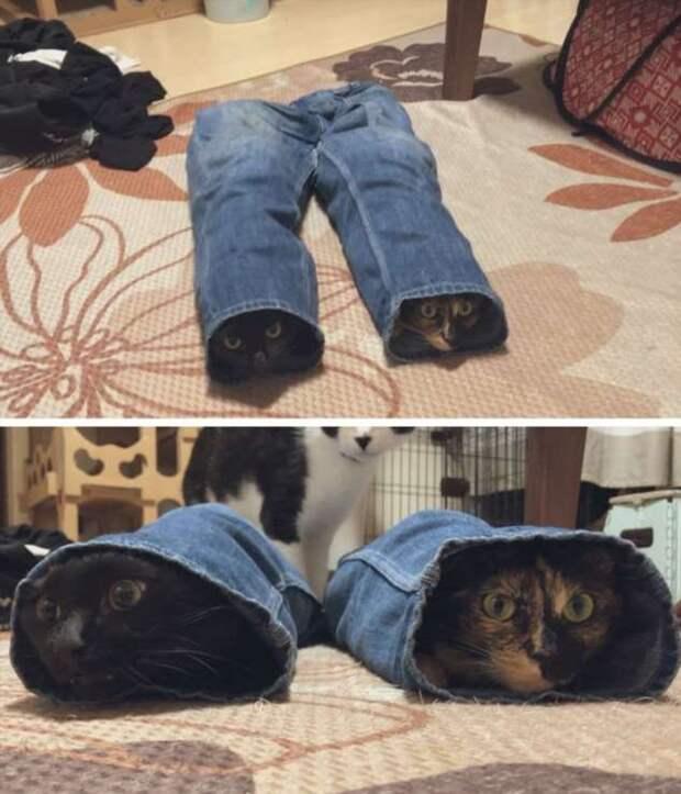 15 вещей, которые мечтает перевести на человеческий каждая кошка