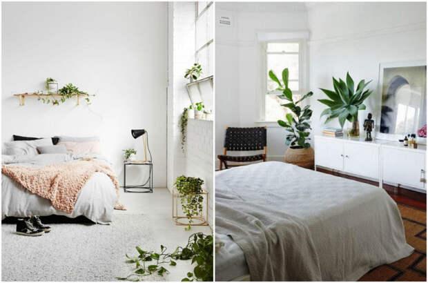 Растения в интерьере спальни. / Фото: ivybush.ru.