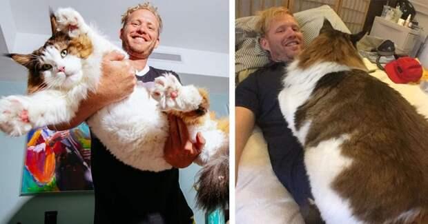 9. Гигантский кот вид, вымысел, гигант, животные, мир, правда, природа, фото