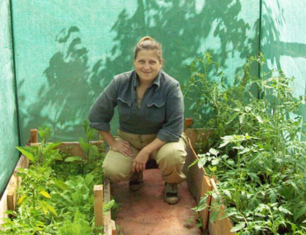 выращивание цикорного салата