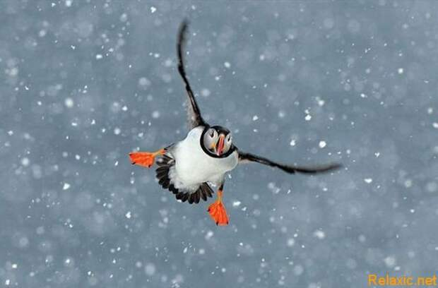 national-geographic-moments-20
