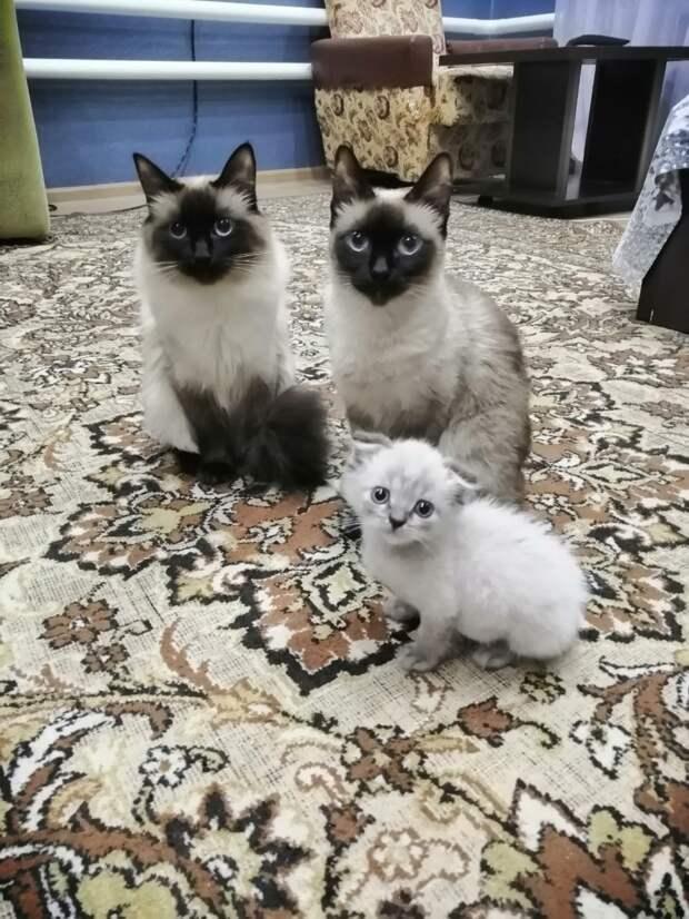 две кошки и котенок