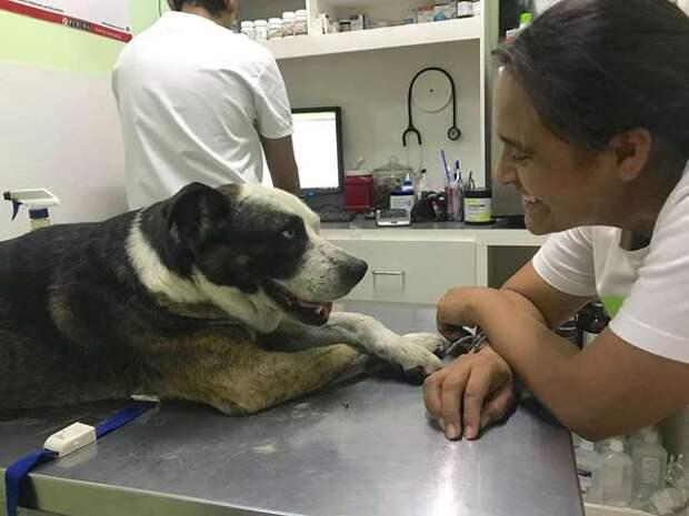 собака в больнице