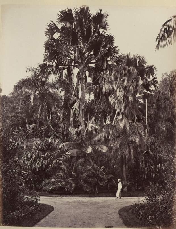 Albom fotografii indiiskoi arhitektury vzgliadov liudei 83
