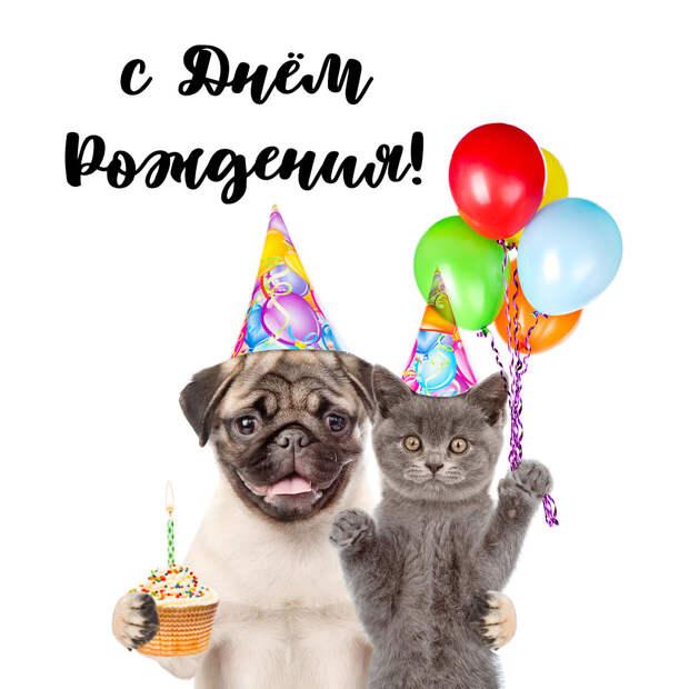 Смешная открытка на день рождения с кошкой и собакой