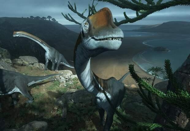 В музее Франции случайно нашли останки крупнейшего динозавра Европы