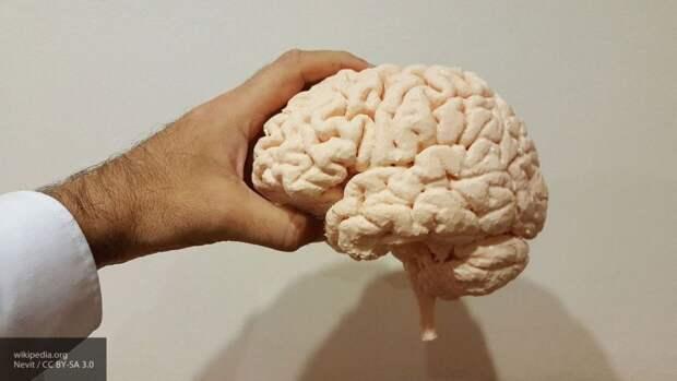 Американец на прогулке по пляжу наткнулся на завернутый в фольгу мозг
