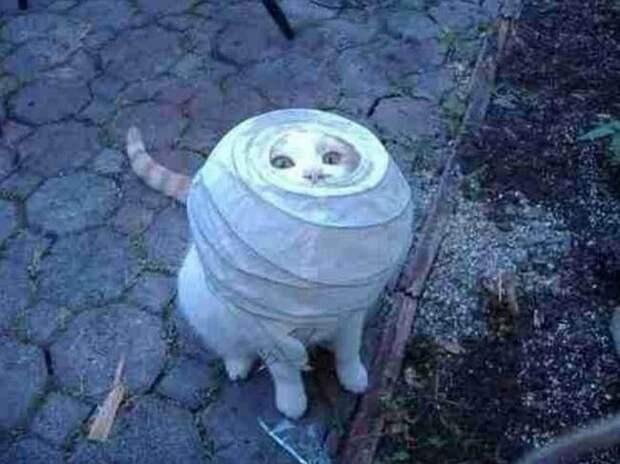 «О таком даже стыдно вспоминать!»: позорные моменты озорных котиков