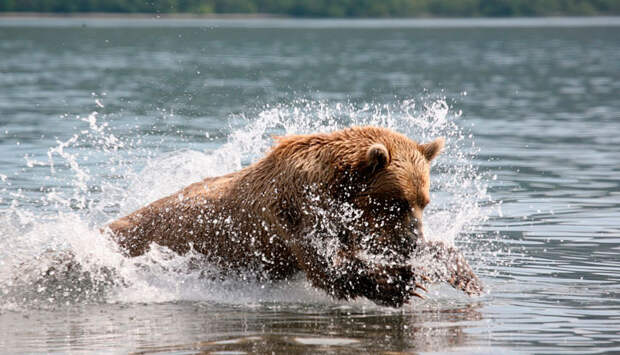 Как я к друзьям на Камчатку ездил и воспитывал ручную медведицу Юльку
