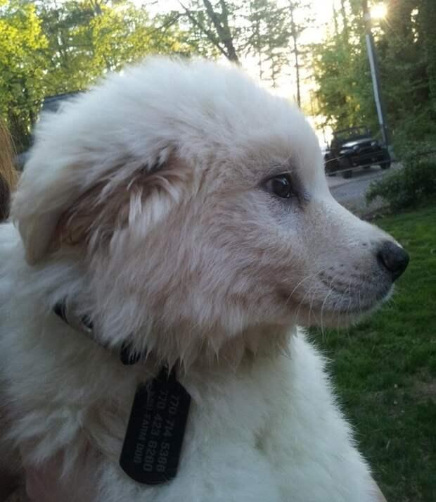 10 пород собак для тех, кто всегда мечтал о своем личном медвежонке