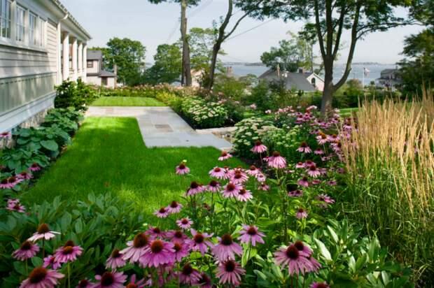 Она декоративно смотрится на отдельных клумбах, заднем плане цветников, в групповых и одиночных посадках
