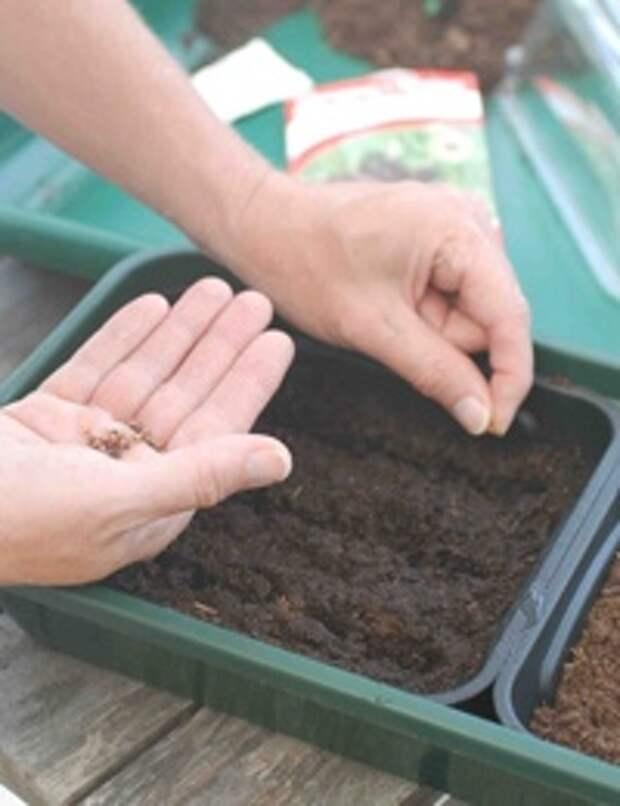 пластиковый лоток с землёй